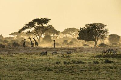 Poster Silhouette di giraffe