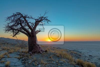 Single baobab tree at sunset on Kubu Island