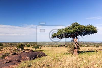 Single Baum auf Savanne, Busch in Afrika. Tsavo West, Kenia.