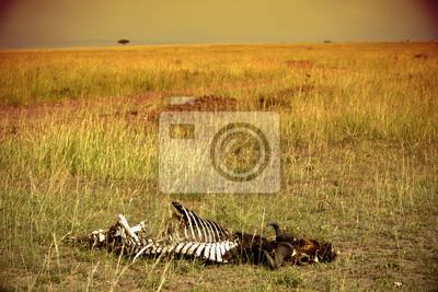 Skelett auf der Savanne. Masasi Mara.
