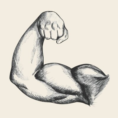 Poster Sketch illustration of muscular human male right arm