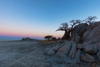 Small baobab tree and rocks at Kubu Island