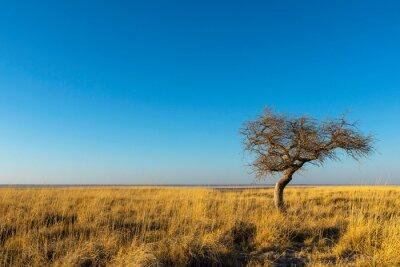 Small tree in dry yellow grass on Kukonje Island