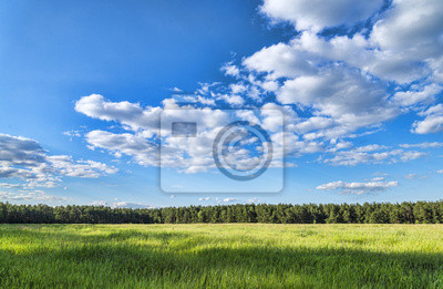 Sommer grünen Wiese Landschaft Wald
