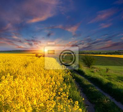 Sommerlandschaft mit einem Feld von gelben Blüten. Sonnenaufgang