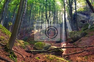 Sommermorgen im mystischen Wald