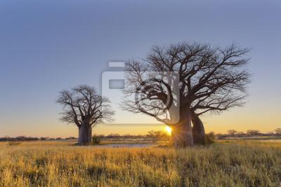 Sonnenaufgang am Baines Baobab Campingplatz
