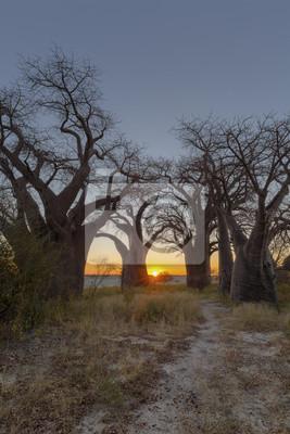 Sonnenaufgang bei Baines Baobabs