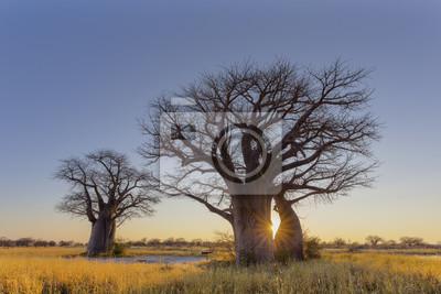 Sonnenaufgang bei Baines Baobabs Campingplatz Nr. 2