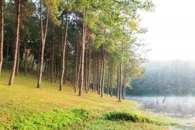 Poster Sonnenstrahlen in Natural Fichte Woodland
