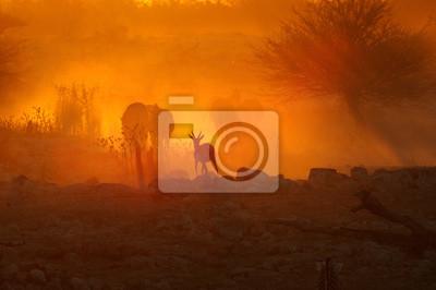 Sonnenuntergang am Okaukeujo, Namibia