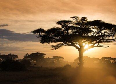Poster Sonnenuntergang auf der afrikanischen Savanne