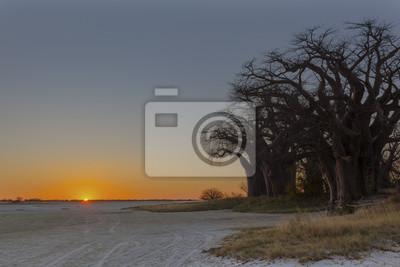 Sonnenuntergang bei Baines Baobab