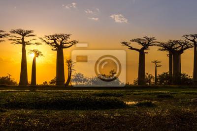 Sonnenuntergang über Baobab Allee