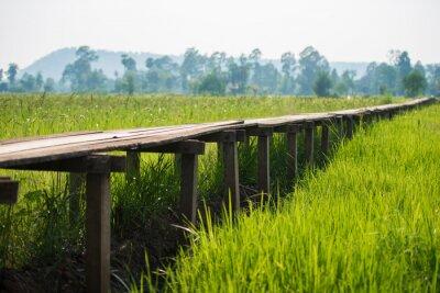 Poster Sonnig Morgengrauen in einem Feld in Thailand