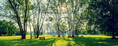 Poster Sonnigen Sommer Park mit Bäumen und grünem Gras