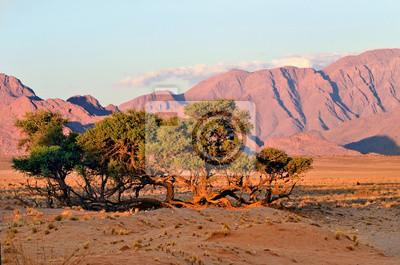 Sossusvlei, Nationalpark Namib Naukluft, Namibia