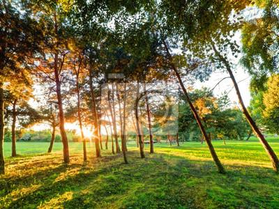 Spätsommer, Herbst Sonnenuntergang in einem Park