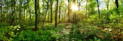 Poster Spring forest with bright sun shining through the trees