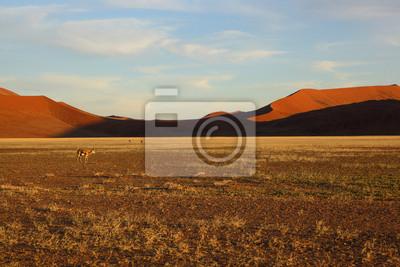 Springbock im Namib Naukluft NP