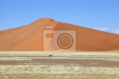 Springbok vor der großen Düne