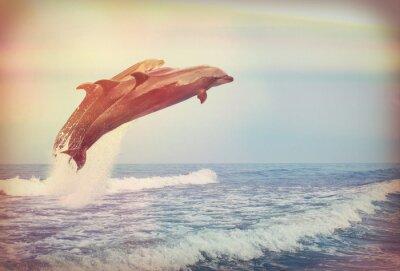 Poster Springen Delfine, Instagram