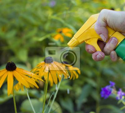 Sprühen Blumen