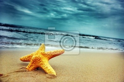 Starfish auf der tropischen Strand