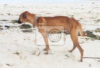 streunenden Hund