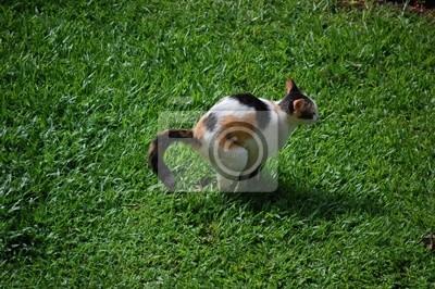 Stuhlgang Katze Wandposter Poster Scheiße Stinkende Katzen