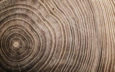 Poster Stumpf des gefällten Baums - Abschnitt des Stammes mit Jahresringen. Scheibe Holz.