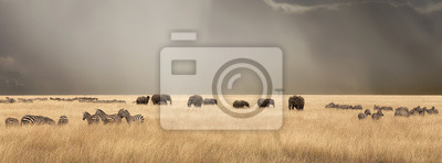 Poster Stürmischer Himmel über dem Masai Mara mit Elefanten und Zebras