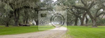 Poster Südliche Plantage im Nebel
