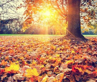 Poster Sunny Herbstlaub