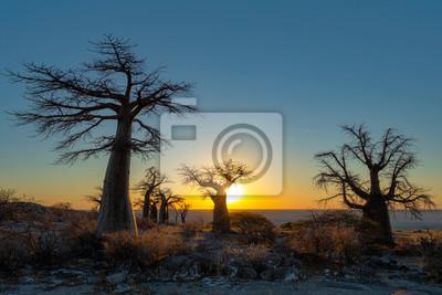 Sunrise at baobab trees on Kubu Island