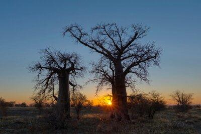 Sunrise at two baobab trees on Kukonje Island