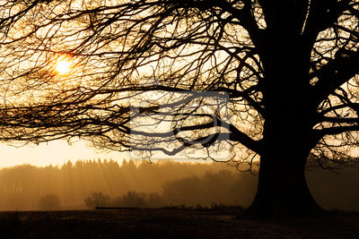 Sunrise behind the silhouette of a beautiful big tree at the Posbank in the Netherlands