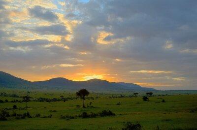 Sunrise in african savanna, Masai Mara national park, Kenya, Africa