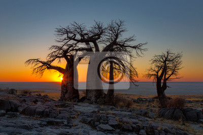 Sunrise over Sua Pan behind the baobabs on Kubu Island
