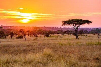 Poster Sunset in savannah of Africa with acacia trees, Safari in Serengeti of Tanzania