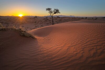 Sunset on the windswept red sand dune