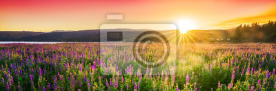 Poster Sunset over field with wild flowers