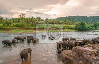 Swimmong Elefanten