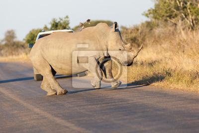 Tänzelnder Rhino