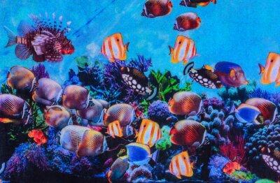Poster Textur des Druckgewebes gestreiften Aquarium