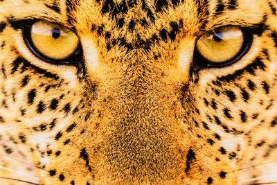 Poster Textur Nahaufnahme Druckgewebe Streifen Leopard