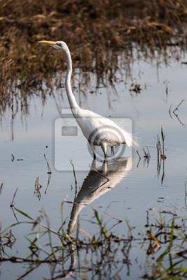 The amazing wildlife in Chobe National Park Botswana