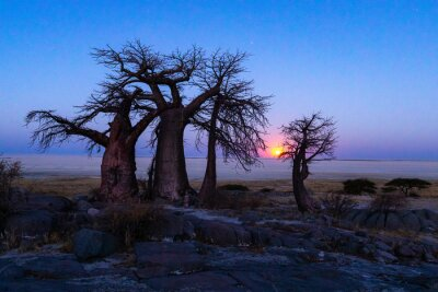 The full moon rise at the baobab trees