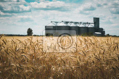 Poster the grain elevator
