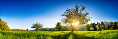 Poster The sun shining through a tree on a green meadow, a panoramic vibrant rural landscape with clear blue sky before sunset